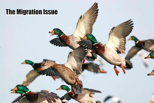 The Migration Issue: December 2017