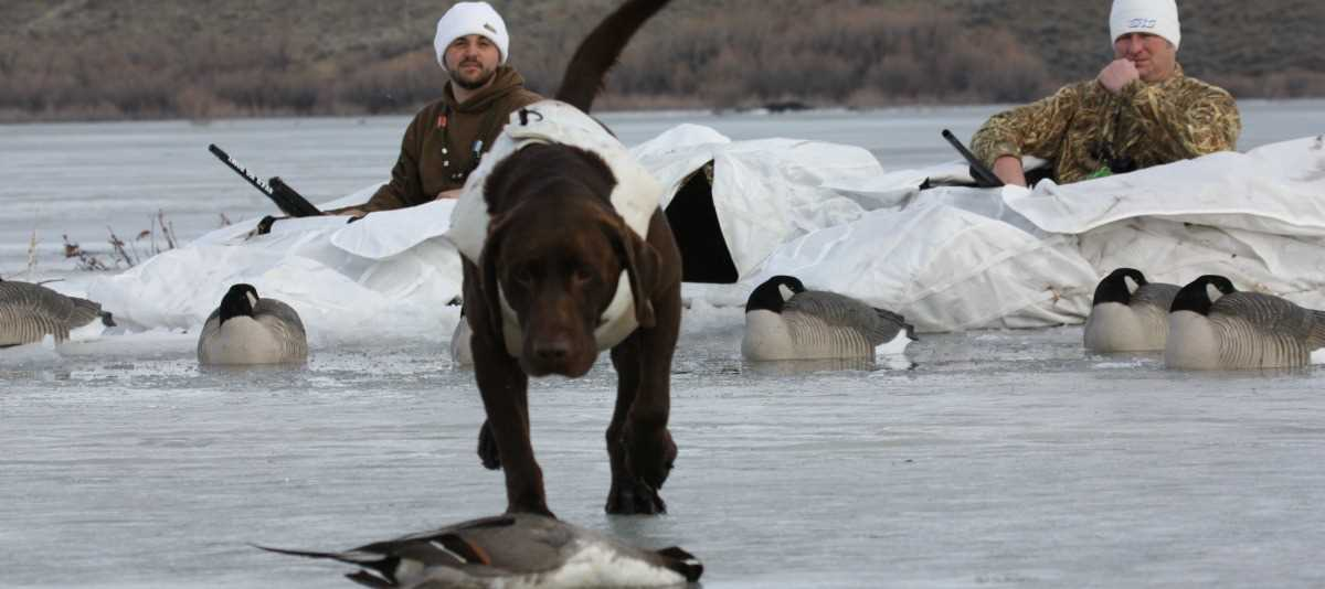 4a5164ef1f Cold Weather Duck Hunting Tips