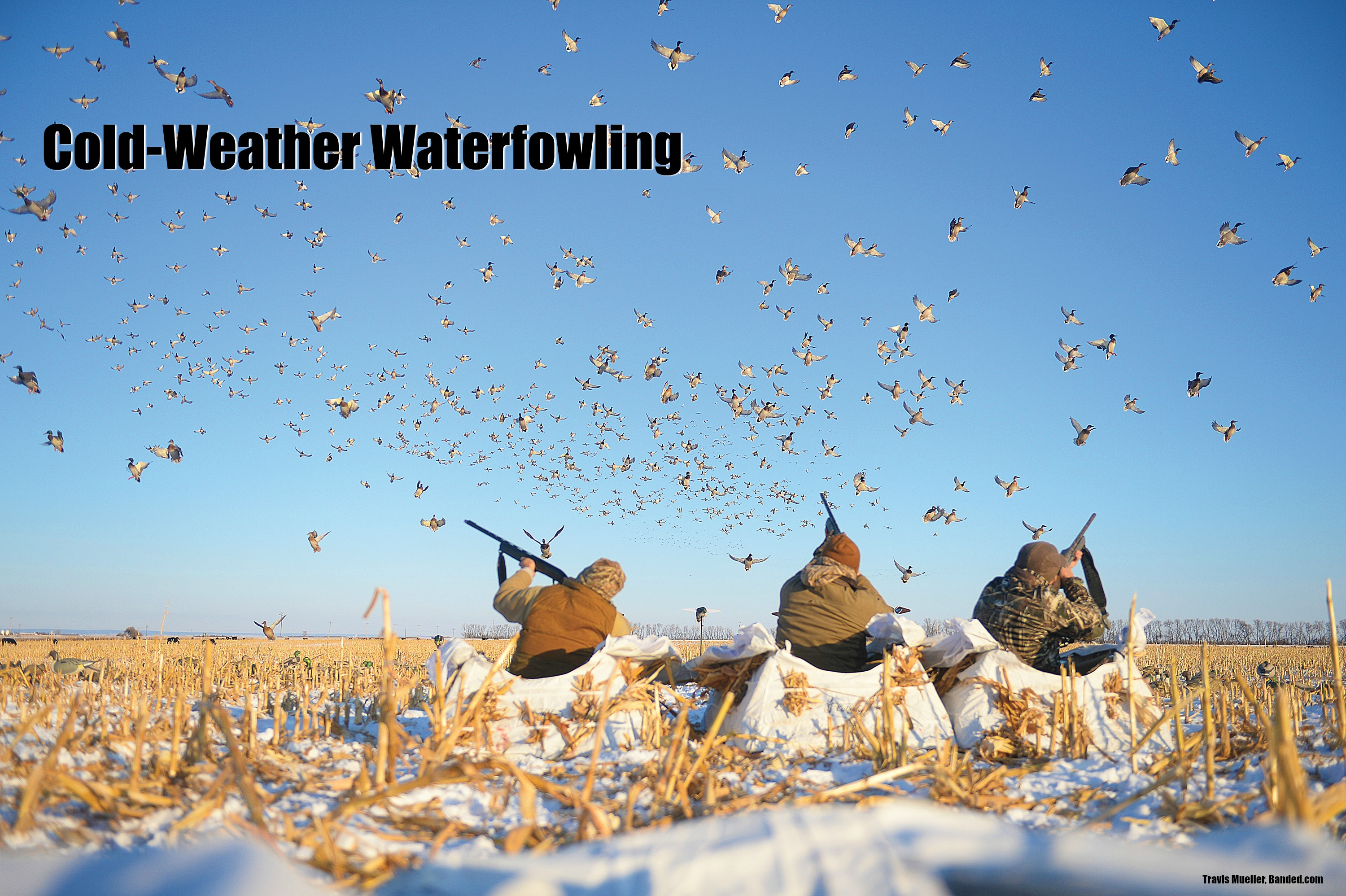 The Cold-Weather Waterfowling Issue: January 2018